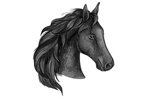 Black graceful horse