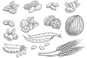 Nuts, grain, berries sketches