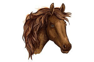 Brown graceful horse