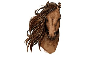 Brown horse color sketch