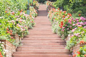 Walk up the stairs in the garden