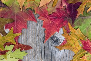 Colorful Autumn Leaves on wood