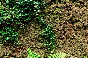 texture of rocks overgrown with moss