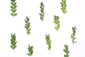 Pattern of green leaves
