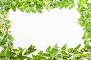 Framing of green leaves