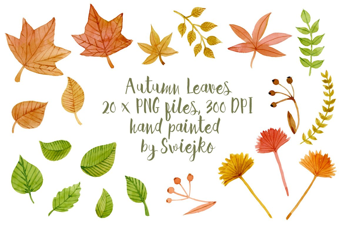 Autumn Leaves, clipart ~ Illustrations ~ Creative Market