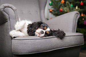 Cute dog relaxing.