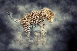 Animal in smoke