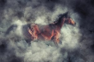Animal in smoke