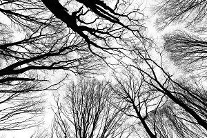 Halloween branches