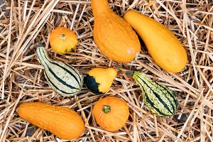 Fall Gourds on Straw and Wood