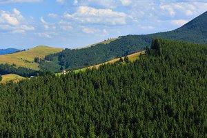 Summer Carpathian mountains