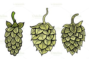 Hops vector visual graphic