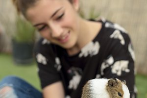Girl happy with your Guinea pig.