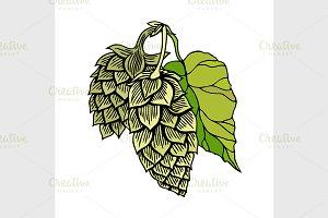 Hop organic herb