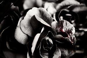 Halloween Black Roses