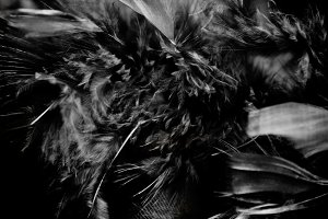 Black Feathers -Halloween theme