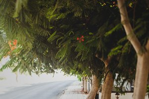 Sidewalk with trees