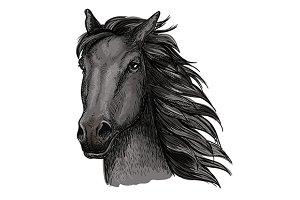 Black proud horse