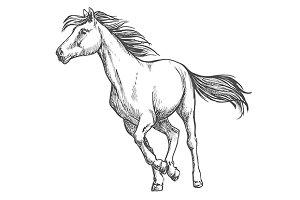 White horse running freely