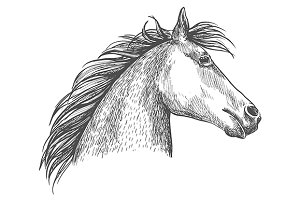 White horse profile sketch