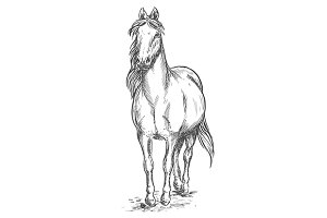 Walking white horse sketch