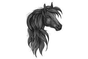 Sketch of black purebred horse