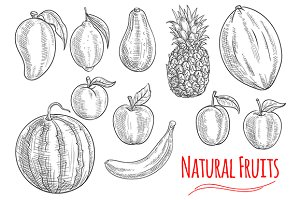 Sketches of fresh fruits