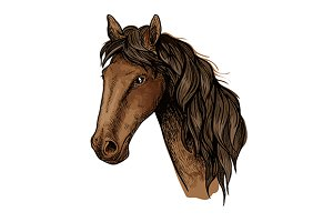Brown racehorse sketch