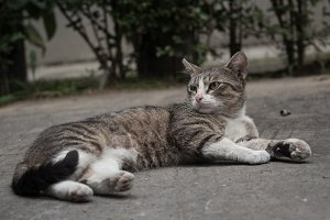 Backyard alley cat