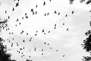 pigeon flying in the sky