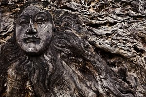 Old wooden face on roots