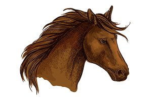 Stallion horse head sketch