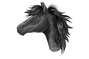Black mare horse sketch