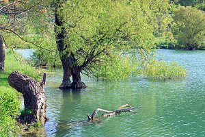 Spring lake, Crimea