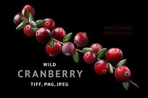 Cranberry branch