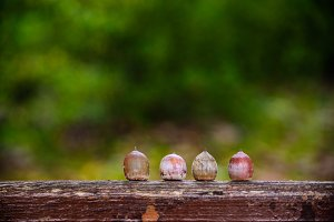 Four acorns in a row