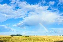 Beautiful summer field