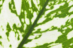botanical natural background