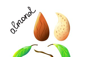 Colourful almond made in vector.