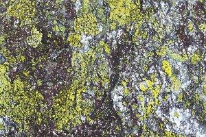 lichen on stone natural background