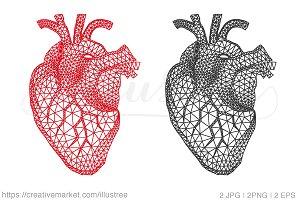 Geometric Human Heart