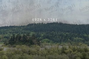 Forest horizon background