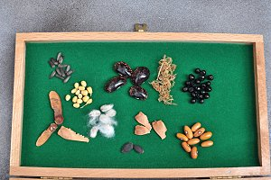 collection of seeds