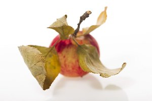 Apple with leaves on a white plastic background