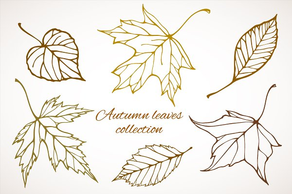 Fall leaves patterns+illustrations