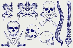 Skeleton, human bones
