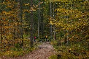 Gloomy autumn forest