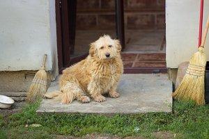 old house dog sitting door entrance