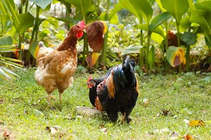farm animals grass green